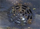 Sewer grate